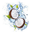 Ice coconuts on white background - PhotoDune Item for Sale