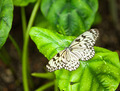 White exotic butterfly - PhotoDune Item for Sale
