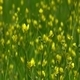 Wildflowers Color of Spring 2 - VideoHive Item for Sale