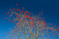 Sorbus tree with blue background - PhotoDune Item for Sale