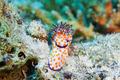 Orange dotted slug - PhotoDune Item for Sale