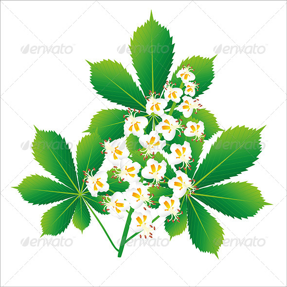 GraphicRiver Chestnut Flower 7754849