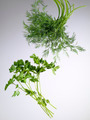 dill and parsley - PhotoDune Item for Sale
