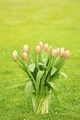 Tulips in the glass vase - PhotoDune Item for Sale