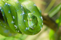 Green snake - PhotoDune Item for Sale