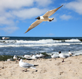 seagulls are flying against the beach - PhotoDune Item for Sale