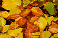 autumn foliage - PhotoDune Item for Sale