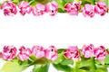pink tulip - PhotoDune Item for Sale
