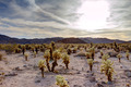 Surreal Desert Cactus Landscape - PhotoDune Item for Sale