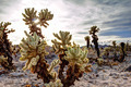 Cactus Garden Landscape at Sunset - PhotoDune Item for Sale