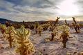 Surreal Desert Landscape - PhotoDune Item for Sale