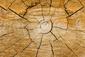Cut wood background texture - PhotoDune Item for Sale