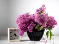 lilac flower - PhotoDune Item for Sale