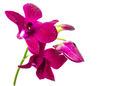 violet orchid  flower - PhotoDune Item for Sale