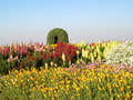 Flower garden at  Doi Inthanon mountain in Chiang Mai, Thailand. - PhotoDune Item for Sale