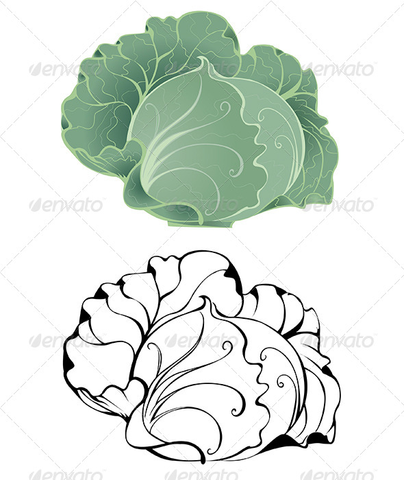 GraphicRiver Stylized Cabbage 7803706