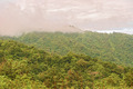 Rain forest, Panama - PhotoDune Item for Sale