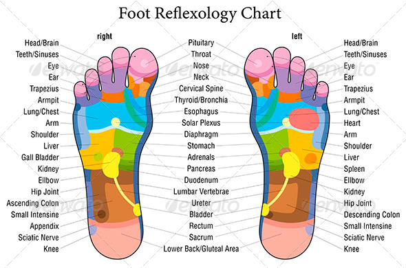 GraphicRiver Foot Reflexology Chart Description 7813903
