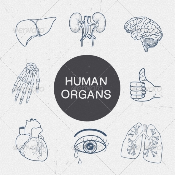 GraphicRiver Human Organs Collection 7814785