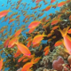 Tropical Fish on Vibrant Coral Reef 769 - VideoHive Item for Sale