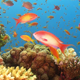 Colorful Fish on Vibrant Coral Reef 771 - VideoHive Item for Sale