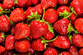 Fresh Strawberry Background - PhotoDune Item for Sale