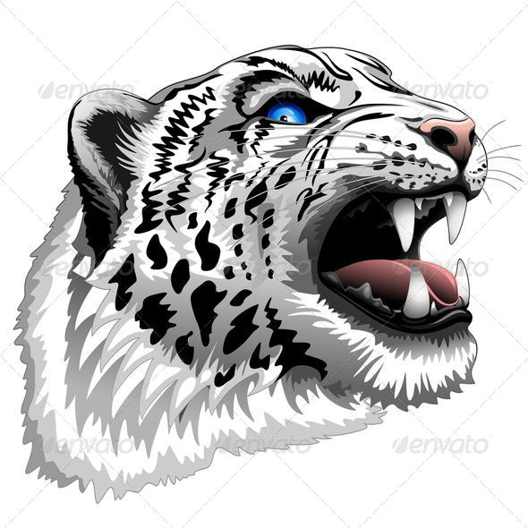 GraphicRiver Snow Leopard Roar 7841634