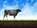 Farm Cow Walking on Grass Soil - PhotoDune Item for Sale
