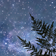 Calm Starry Night - VideoHive Item for Sale