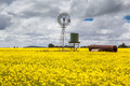 Canola Fields Near Smeaton - PhotoDune Item for Sale