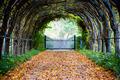 Foxglove Spires Path - PhotoDune Item for Sale