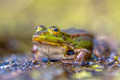 Green Frog Outside - PhotoDune Item for Sale