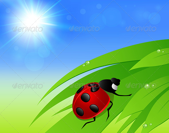 GraphicRiver Green Grass Sun and Ladybird 7880671