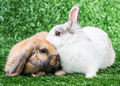 two rabbits on grass - PhotoDune Item for Sale
