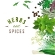 Herbs and Spices - GraphicRiver Item for Sale