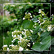 Green Leaves And Flowers - VideoHive Item for Sale