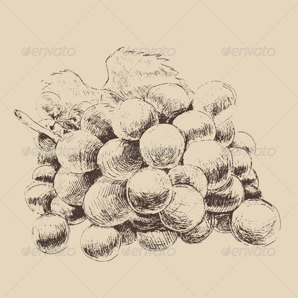 GraphicRiver Bunch of Grapes Vintage Illustration Engraved 7981057