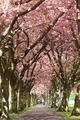 Blossom Avenue, The Meadows, Edinburgh, Scotland - PhotoDune Item for Sale