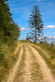 Walking Path and Spruce - PhotoDune Item for Sale