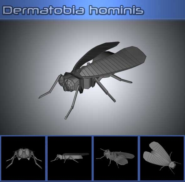 3DOcean Dermatobia Hominis 3D Models -  Animals  Insects and small animals 842708