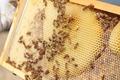Honeycomb Hive - PhotoDune Item for Sale