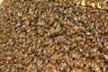 Beehive Group - PhotoDune Item for Sale