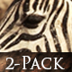 Group of Zebra and Antelope - 14