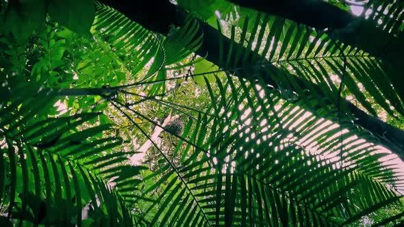 Download Moving Under Jungle Plants At Sunrise nulled download