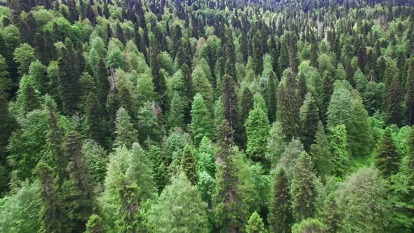 Download Aerial View Above Green Forest nulled download