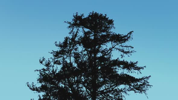 Download Tree Silhouette Against Blue Sky nulled download