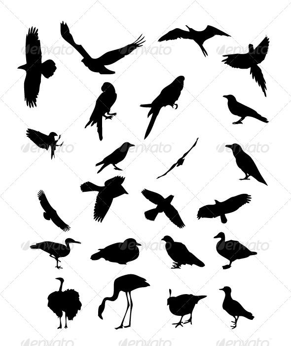 GraphicRiver Birds Silhouettes 8470107
