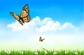 Nature background with butterflies.  - PhotoDune Item for Sale