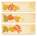 Three autumn banners with color leaves - PhotoDune Item for Sale