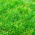 Green grass on a spring field - PhotoDune Item for Sale